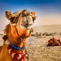 Costa Kreuzfahrten mit Dubai schon ab 399 Euro